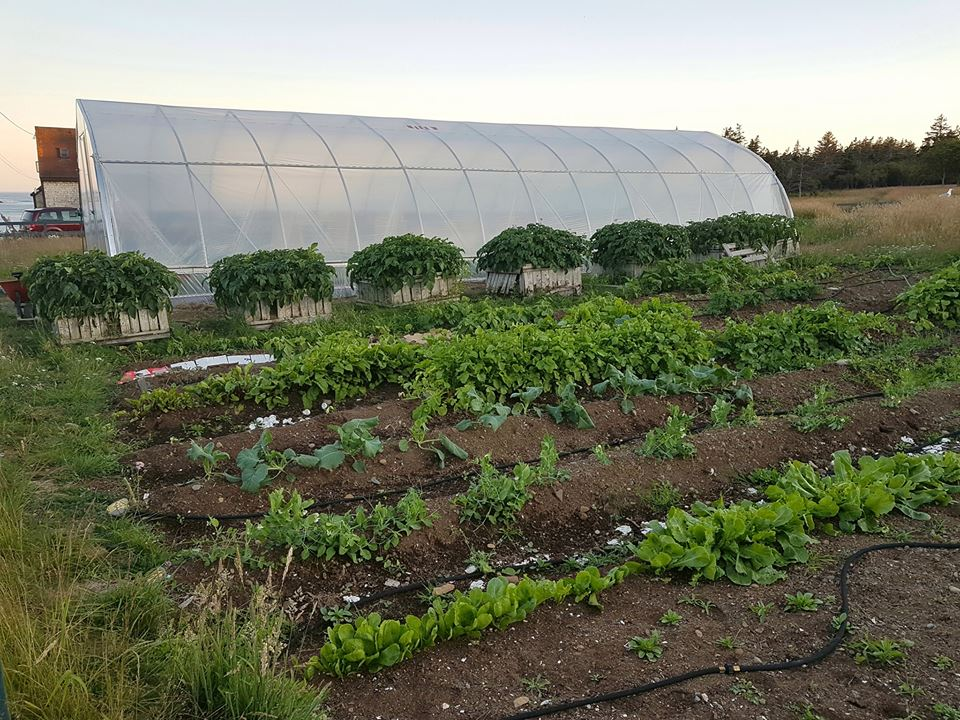 Brier Island Lodge food Greenhouse garden